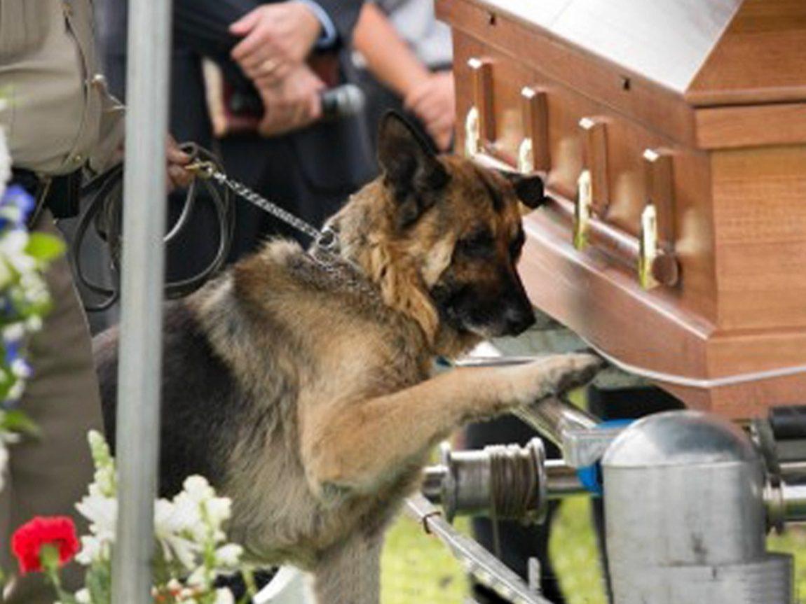 Dog-German-Shepard-at-casket.jpg