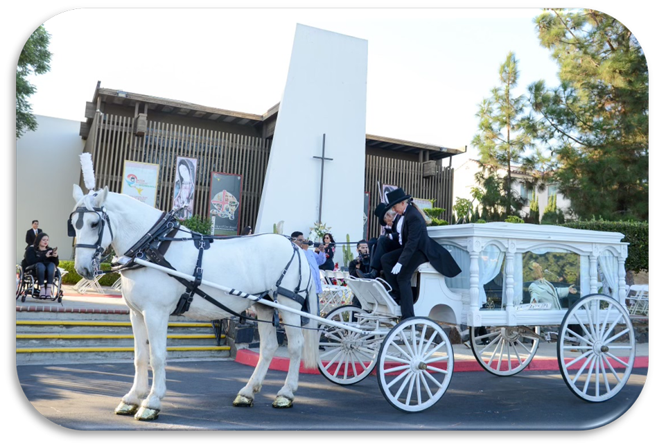 White carriage with white horse pulling casket in carriage